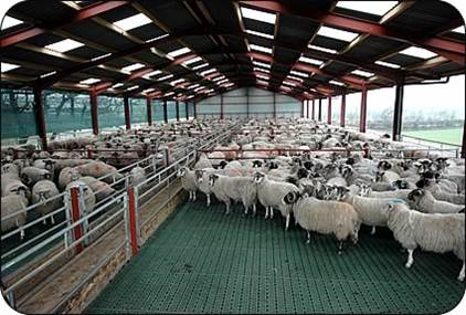 دانلود مقاله جایگاه های پرورش گوسفند(پاورپوینت)