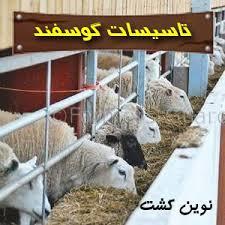 همه چیز در مورد بهداشت  جایگاه گوسفند(پاور پوینت )