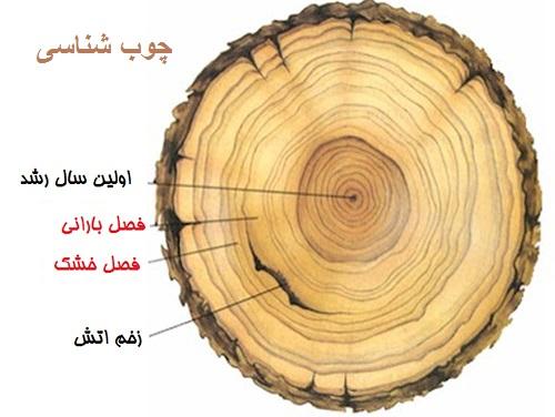 دانلود جزوه کامل چوب شناسی ومدیریت حفاظت چوب