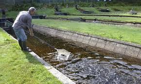 پروژه مالی پرورش ماهی