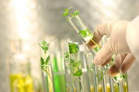 دانلود گزارش کارهای آزمایشگاه فیزیولوژی گیاهی بافرمت word