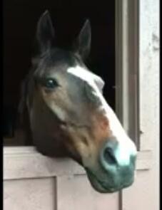 آموزش طراحی اسب با پاستل