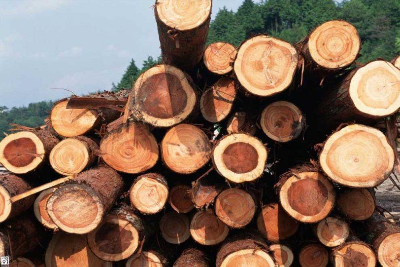 دانلود پاورپوینت  مواد و مصالح ساختمانی -  چوب  ( تنها مصالح تجدیدپذیر ) در 27 اسلاید