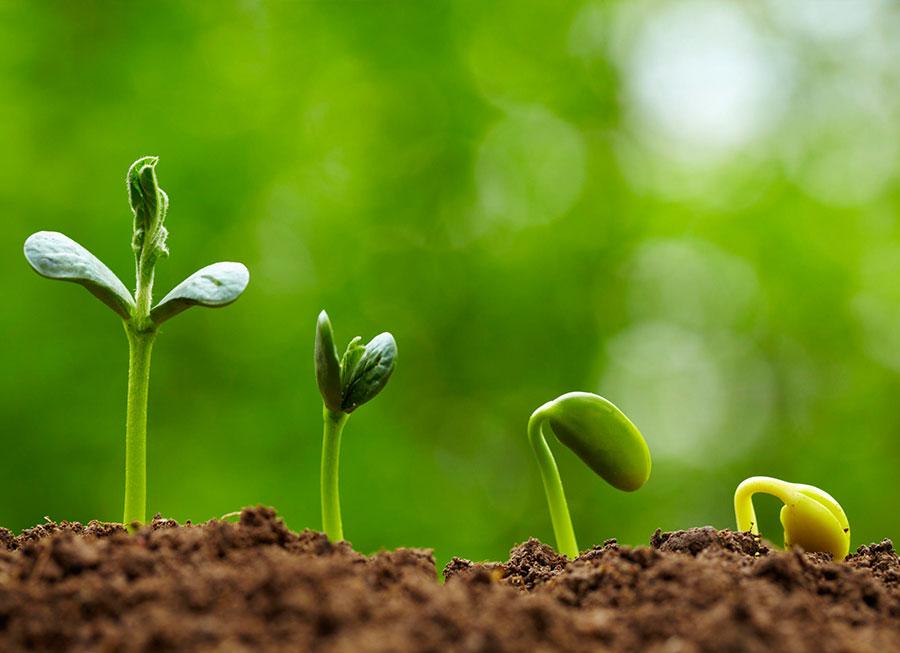 پاورپوینت کامل و جامع با عنوان بذر و آماده سازی بستر بذر در زراعت در 82 اسلاید