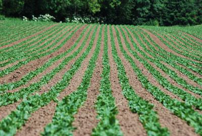 پاورپوینت کامل و جامع با عنوان عملیات کاشت، داشت و برداشت در کشاورزی در 109 اسلاید