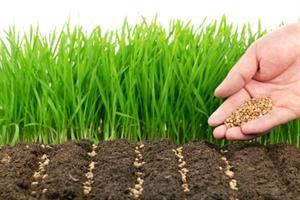 پاورپوینت کامل و جامع با عنوان انواع روش های تکثیر گیاهان در 49 اسلاید