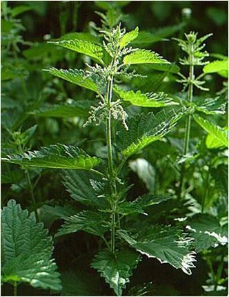 پاورپوینت کامل و جامع با عنوان دسته بندی گیاهان در زیررده آلیسماتیده در 38 اسلاید