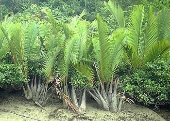 پاورپوینت کامل و جامع با عنوان دسته بندی گیاهان در زیررده آره سیده در 34 اسلاید