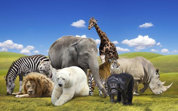 پاورپوینت کامل و جامع با عنوان الگوی جانوران در 58 اسلاید