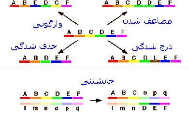پاورپوینت کامل و جامع با عنوان انواع ناهنجاری های کروموزومی در 101 اسلاید
