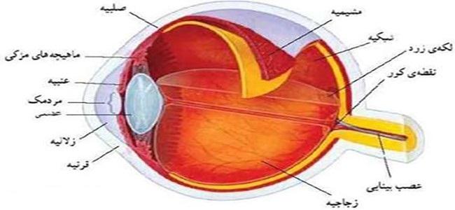 پاورپوینت کامل و جامع با عنوان انواع بیماری های چشم در 162 اسلاید