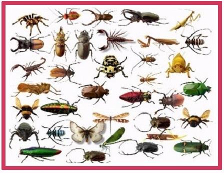 پاورپوینت کامل و جامع با عنوان حشرات در رده بندپایان در 57 اسلاید