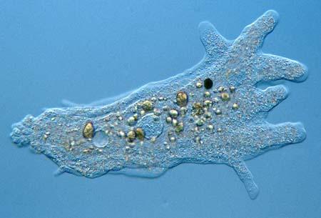 پاورپوینت کامل و جامع با عنوان دیرینه شناسی شاخه پروتیستا یا پروتوزوآ در 24 اسلاید