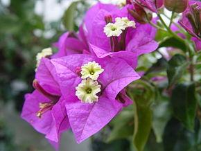 پاورپوینت کامل و جامع با عنوان دسته بندی گیاهان در زیررده کاریوفیلیده در 42 اسلاید