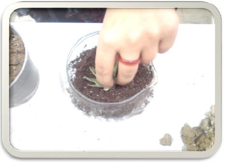آموزش نحوه ساخت تراریوم ( باغ شیشه ایی ) همراه با تصاویر ( پاورپوینت )