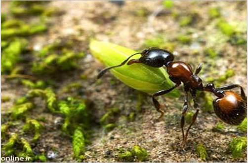 دانلود پاورپوینت زندگی مورچهها