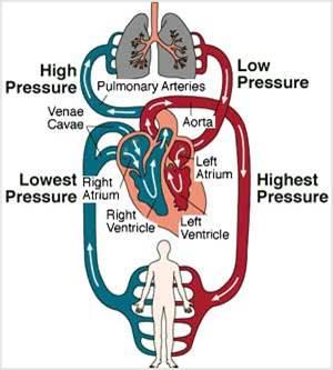 دانلود پاورپوینت نارسایی احتقانی قلب(CHF)
