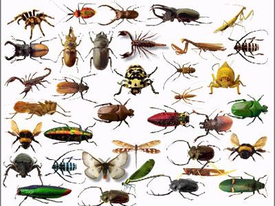 دانلود پاورپوینت حشرات مفید و مضر