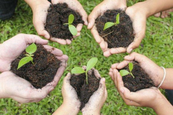 دانلود پاورپوینت نقش و اهمیت درختکاری