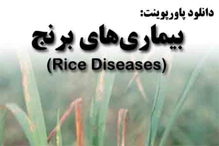 دانلود پاورپوینت بیماریهای برنج