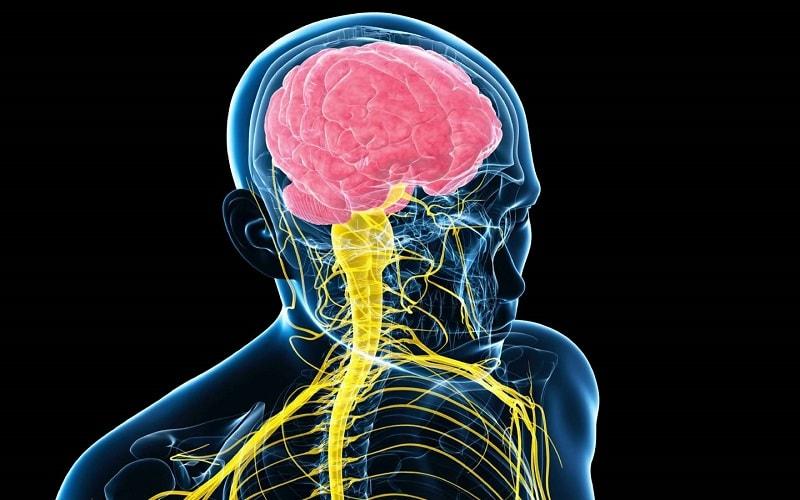 دانلود پاورپوینت دستگاه عصبی(Nervous System)