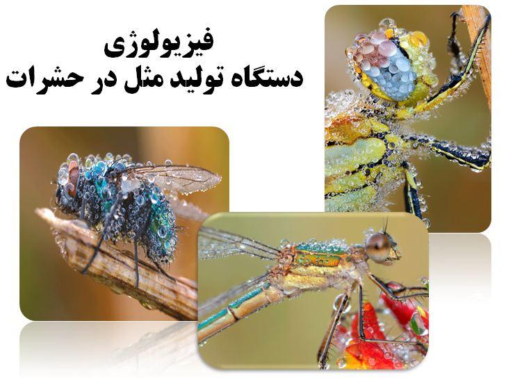 دانلود پاورپوینت فیزیولوژی دستگاه تولید مثل در حشرات