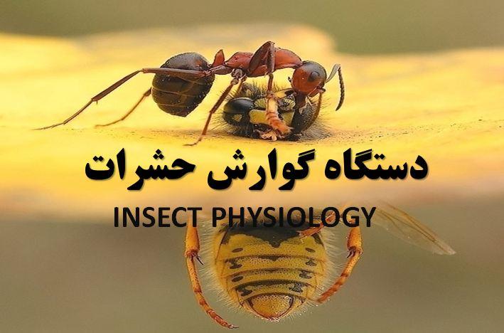 دانلود پاورپوینت دستگاه گوارش حشرات