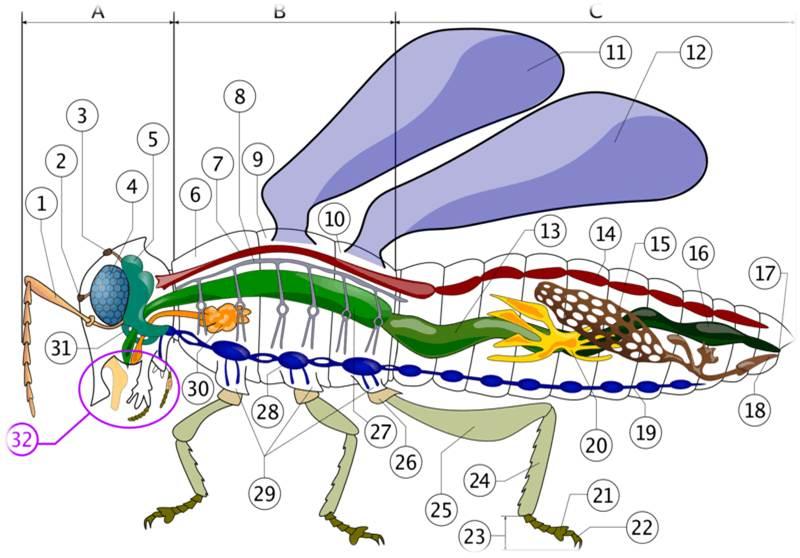 دانلود پاورپوینت فیزیولوژی دستگاه عصبی حشرات