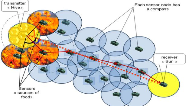 دانلود پاورپوینت الگوريتم كولونی زنبور عسل(Artificial bee colony algorithm)
