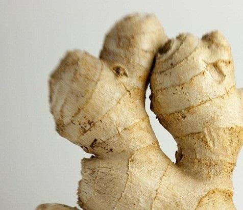 کلیات گیاه شناسی(زنجبیل)