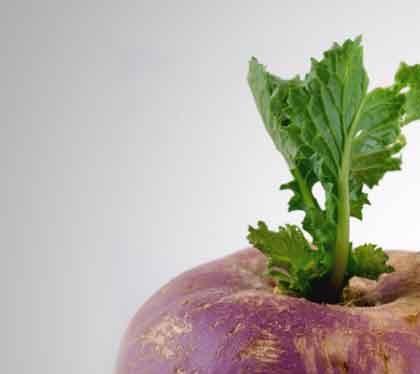 کلیات گیاه شناسی( شلغم)