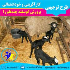 طرح توجیهی پرورش گوسفند چندقلوزا داشتی و پرواری همسمان( 52راسی) دوره پرورش  1ماهه- سال99