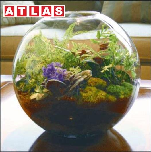 طرح توجیهی کشت گیاهان دارویی در گلخانه ورد وpdf-ویرایش 99