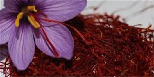 تحقیق درباره  زعفران