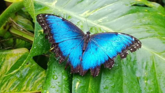 مقاله و انشا و تحقیق انگلیسی درباره پروانه