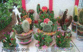 پرورش گل وگیاه  در خانه