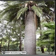 Oil palm shellبرسی رفتارخمشی تیرهای بتنی مسلح سبک وزن ساخته شده از