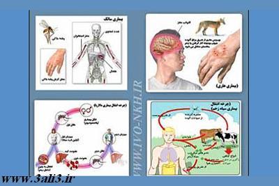 بیماری های مشترک بین انسان و حیوان