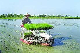 کشت مکانیزه برنج