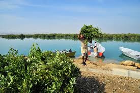 بررسی اقلیم گرم و مرطوب ابنیه سنتی در کرانه شمالی خلیج فارس و دریای عمان