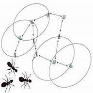 Ant Colony ها، Ant System ها و کاربرد آنها در حل مسايل