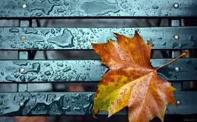 نیمکت باران