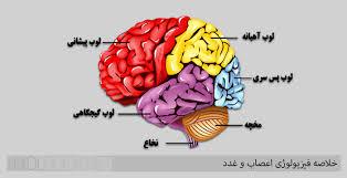 دانلود پاورپوینت  فيزيولوژي اعصاب(1) در28 اسلاید