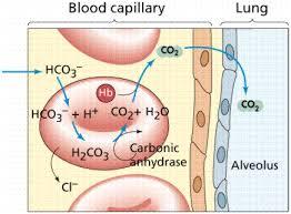 دانلود پاورپوینت  تفسیر گازهای خونی شریانی در 75 اسلاید کاربردی و کاملا قابل ویرایش