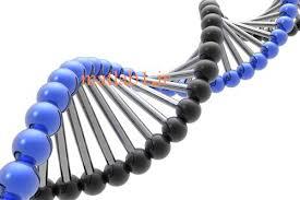 دانلودپاورپوینت الگوریتم های ژنتیک  در 64 اسلاید کاربردی و کاملا قابل ویرایش