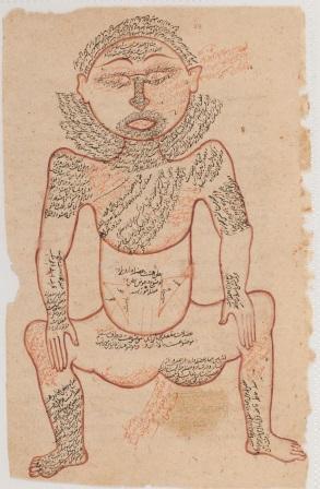 تشریح بدن انسان درعلم طب