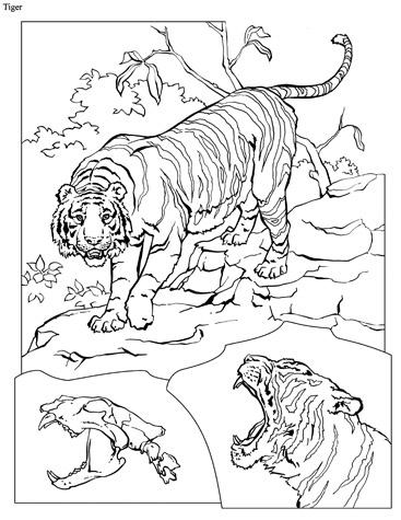 کتاب طراحی حیوانات ( تهیه شده توسط نشنال جئوگرافیک)