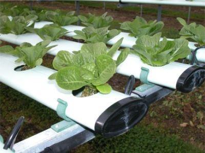 پکیج آموزشی کشت کلیه گیاهان و سبزیجات و میوجات به روش هیدروپونیک در خانه
