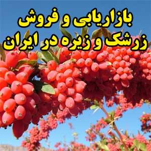 بازاریابی و فروش زرشک و زیره در ایران