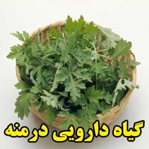گیاه دارویی درمنه